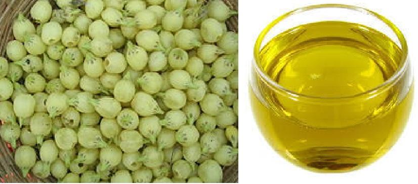 Madhuca Longifolia Oil